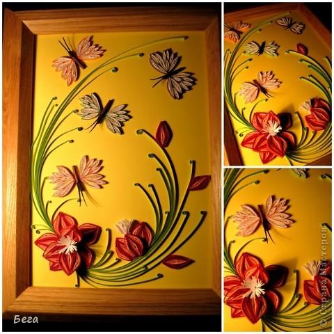 бабочки для радости фото 2