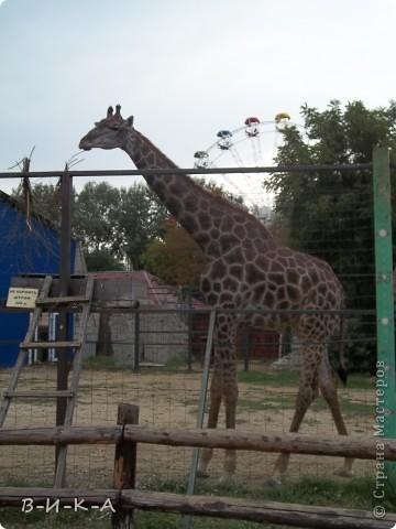 """В этом зоопарке находится более 120 видов животных и птиц, 80% из которых занесены в  Международную Красную Книгу. Его площадь составляет 10 гектар.                 Есть возле реки Кубань  в южном городе Краснодаре """"Солнечный остров"""". И на этом островке существует чудный уголок природы и красоты,где мы с семьей любим отдыхать !!!!! фото 3"""