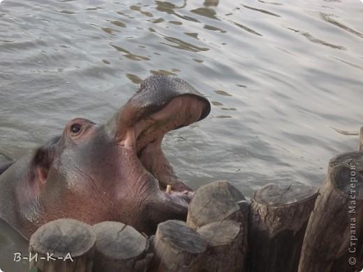 """В этом зоопарке находится более 120 видов животных и птиц, 80% из которых занесены в  Международную Красную Книгу. Его площадь составляет 10 гектар.                 Есть возле реки Кубань  в южном городе Краснодаре """"Солнечный остров"""". И на этом островке существует чудный уголок природы и красоты,где мы с семьей любим отдыхать !!!!! фото 1"""
