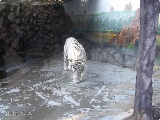"""В этом зоопарке находится более 120 видов животных и птиц, 80% из которых занесены в  Международную Красную Книгу. Его площадь составляет 10 гектар.                 Есть возле реки Кубань  в южном городе Краснодаре """"Солнечный остров"""". И на этом островке существует чудный уголок природы и красоты,где мы с семьей любим отдыхать !!!!! фото 17"""