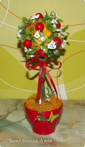 """Здравствуйте, жители СМ и гости моей странички. Сегодня я вырастила свой ягодный топиарий. Эти ягоды неизвестной породы, поэтому назвала деревцо просто """"Красные ягоды"""". фото 1"""