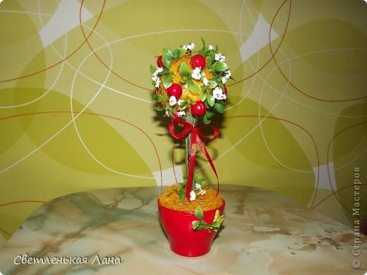 """Здравствуйте, жители СМ и гости моей странички. Сегодня я вырастила свой ягодный топиарий. Эти ягоды неизвестной породы, поэтому назвала деревцо просто """"Красные ягоды"""". фото 4"""