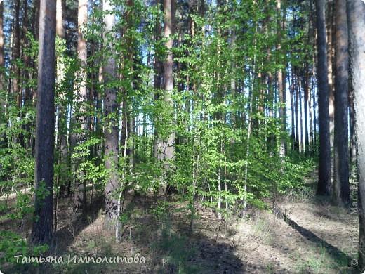 С удовольствием совершили прогулку по нашему весеннему лесу.  фото 7