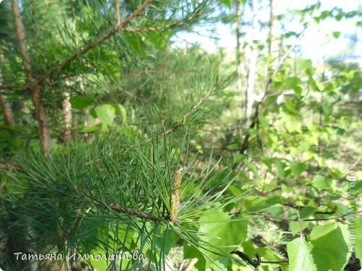 С удовольствием совершили прогулку по нашему весеннему лесу.  фото 9