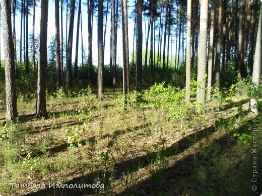 С удовольствием совершили прогулку по нашему весеннему лесу.  фото 4