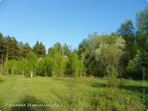 С удовольствием совершили прогулку по нашему весеннему лесу.  фото 12
