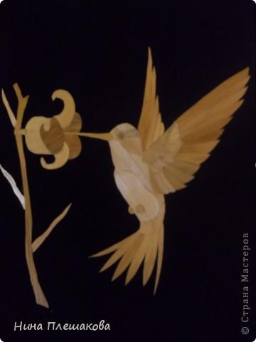 Орел фото 2
