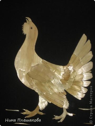 Орел фото 3