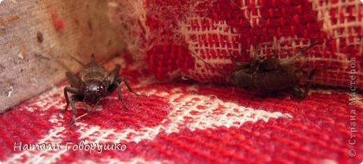 Вот такая красота к нам в домик залетела... фото 38
