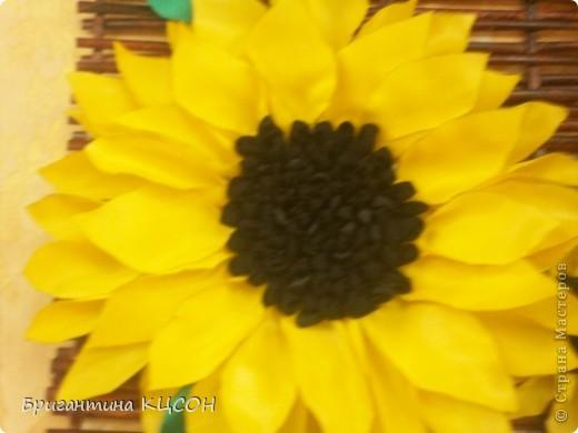 Подсолнухи. фото 2