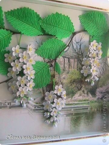 На улице буйно цветет всё! Очень долго собиралась и теперь у меня дома цветущая черемуха, которая будет радовать напоминаем о весне круглый год!  фото 4