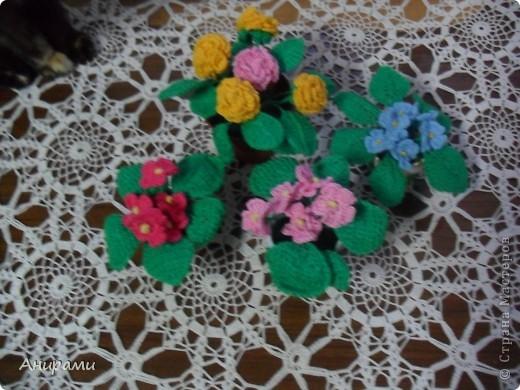 Мои цветы  фото 1