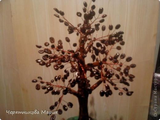 кофейное дерево, повторилась за ольгой роди. кофе не сверлила, замочила зерна в теплой воде на 3 часа и они легко проткнулись иголкой, высушила и вот фото 1