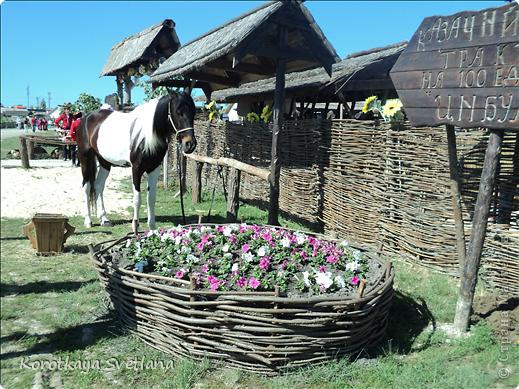"""19 мая было открытие этнографического музея """"Атамань"""" который находится в Краснодарском крае на Таманском полуострове. Я со старшими сыновьями приехали на этот праздник. Впечатлений - море, хотя и моря там хватало.  фото 4"""