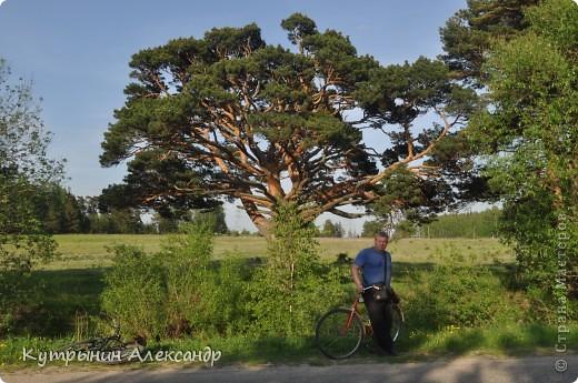 """Приехала дочь на велосипеде и ну, меня провоцировать: """"А слабо тебе, старый пепе (вот так обзывается, негодная) покататься со мной на велосипеде километров сто, ну, скажем, к бабушке в деревню"""" ( для справки; это недалеко, всего 55 км в один конец).  Я категорически возразил: """" На это я пойтить не могу,  потому что это чистой воды утопия и вовсе авантюрная затея"""". А самого внутренне так и подмывает: """"Это мне-то слабо, это мне, который  по молодости, живота своего не жалея, с аэроплана  сигал. Это мне-то слабо, который зимой на снегу спал? А уж тут вот нате-ка, выкусите"""". И несмотря на то, что набрал я зимой немало лишних килограммов из-за моих неуёмных гастрономических пристрастий, решился таки, показать этой юной максималистке, кто в доме хозяин, и чьи в лесу шишки. И как есть, в чём был на огороде одемшись (трико задрипанное, майка и сланцы), изрекаю гордо и пафосно: """"А поехали, назло тахикардии и прочим внутренним козявкам. И будь что будет, и как говорится, живы будем, не помрём"""". А сам смекаю, как же я такой пламенный и гордый, поеду. Велос у меня дряхленький, лет пять как на заслуженном отдыхе в сарае на приколе стоит. Того гляди весь рассыпется, при езде трясётся как паралитик и испускает жалобные стоны. А у неё-то новёхонький, 21-ти скоростной. Но обречённо махнул рукой, подписывая себе смертный приговор: """"А, наплевать!"""" Поднакачал колёса и вывез своего Росинанта на улицу. И вот мы тронулись (хорошо хоть не умом, хотя со стороны может показаться обратное). Вот карта трудного, полного опасностей и невзгод, маршрута (решили скататься туда и обратно за один раз) фото 12"""