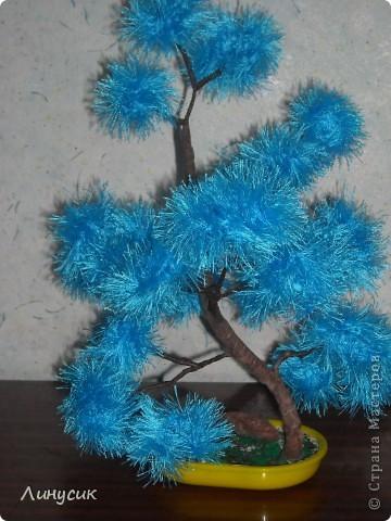 Голубой бонсайчик фото 2
