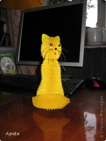 Кошка фото 1