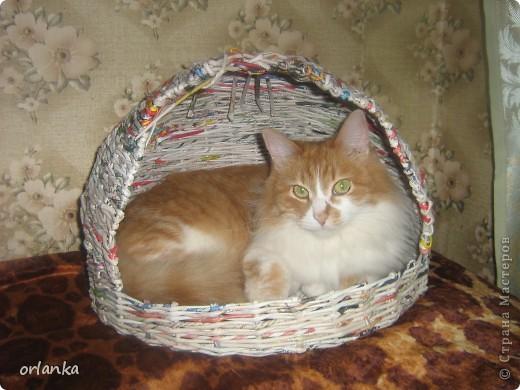 ну никак котяра недаёт доделать себе дом