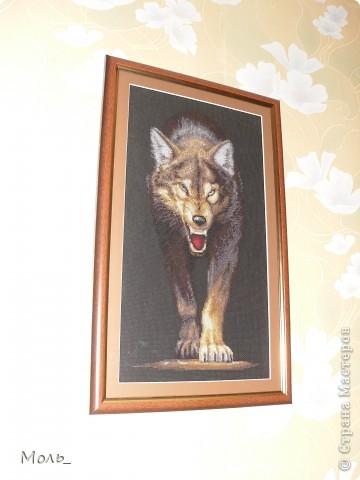 Волчица и пантера фото 3