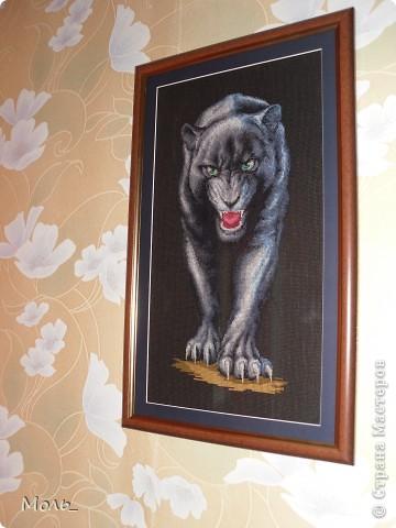 Волчица и пантера фото 2
