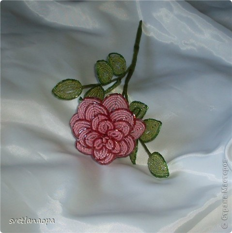 Продолжаю подборку моих роз. фото 5