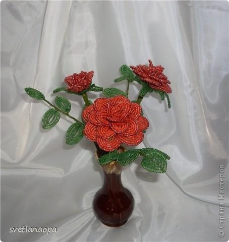 Продолжаю подборку моих роз. фото 7
