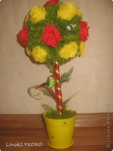 Солнечное деревце фото 4