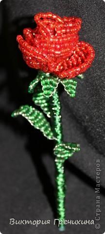 Увидела в блоге у Бригантины http://stranamasterov.ru/node/358781 , и решила - хочу! Мк - http://blog.kp.ru/users/bengovil/post179311426/?upd Моя первая настоящая роза! фото 3