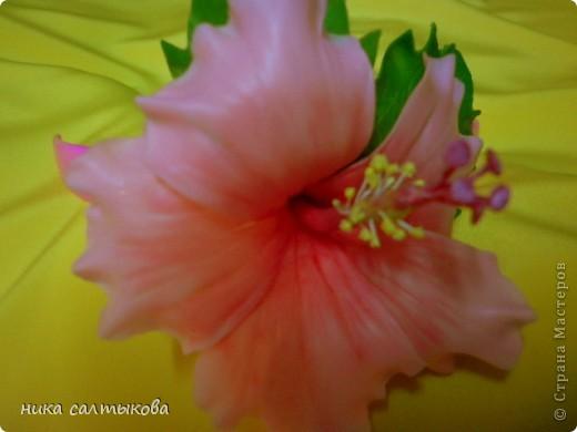 Легенда гласит, что на месте Чэнду тысячу лет назад находилось княжество Поздняя Шу. Правил им князь Мэн Чан, который очень любил цветы и для любимой принцессы, разделявшей его увлечения — он даже назвал ее «Женщина Бутон» — он посадил кустики гибискуса в каждом уголке своих владений. На островах Фиджи существует праздник — День Огненного Гибискуса. Жители украшают свои дома яркими гирляндами и лентами, организуют праздничную процессию из красивых девушек. Гвоздь программы — это выбор королевы цветов. В Индии гибискусы вплетают в свадебные венки.  А на Гавайских островах гибискус называют «цветком прекрасных женщин», потому что местные красавицы носят его в своих черных волосах. фото 2