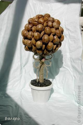 Подруга попросила сделать за пару дней маме на день рождения какой- нибудь топиарий, заглянув на балкон я увидела прошлогодние запасы ореха и косточки абрикоса! вот и пришло моё вдохновение))))) фото 3