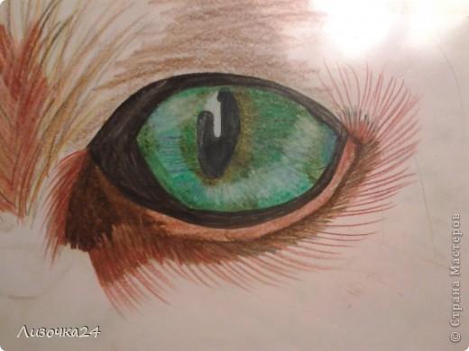 2011 год, глаз кошки, акварельные карандаши 11 лет фото 1