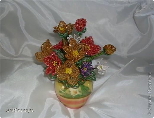 Полевые цветы фото 7
