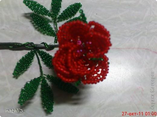 моя первая роза фото 3