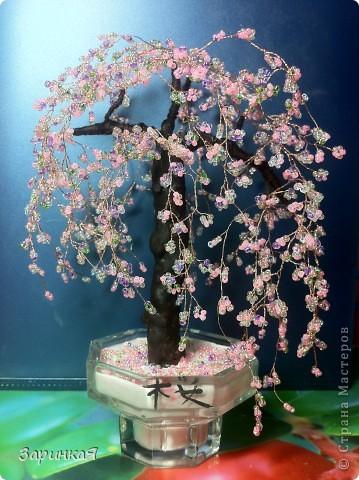 Мини-сакура)) фото 1
