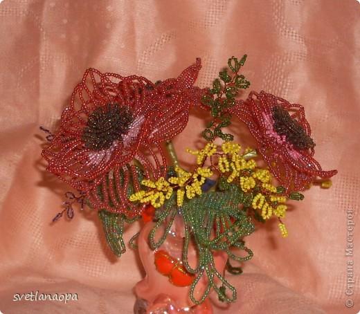Полевые цветы фото 5