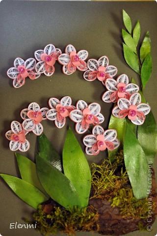 Кручу любимые орхидеи фото 2