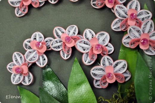 Кручу любимые орхидеи фото 3