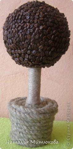 кофейное дерево   фото 11