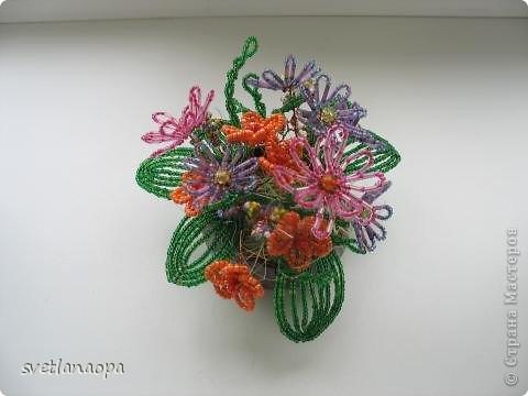Полевые цветы фото 6