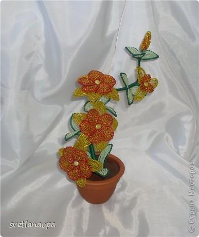 Орхидеи фото 9