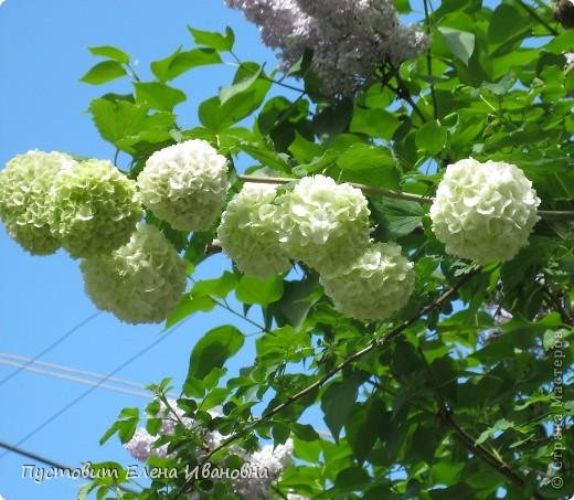 Май - самый последний весенний месяц и самый цветущий.В мае  два особых праздника-День труда и День Победы. фото 21