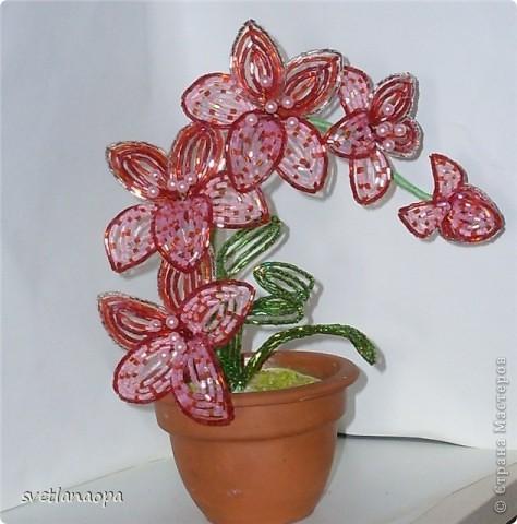 орхидеи бисер.