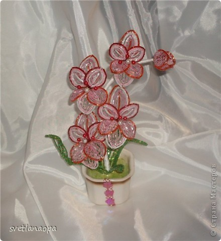 Орхидеи фото 8