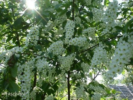 Деревенька моя. фото 8