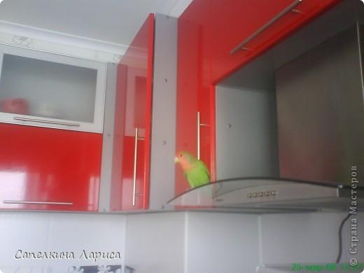 """Доброго времени суток всем Жителям, хотя конкурс """"Птица счастья"""" закрыт, все же хочу познакомить Вас с нашим попугайчиком-неразлучником. Это Чича фото 4"""