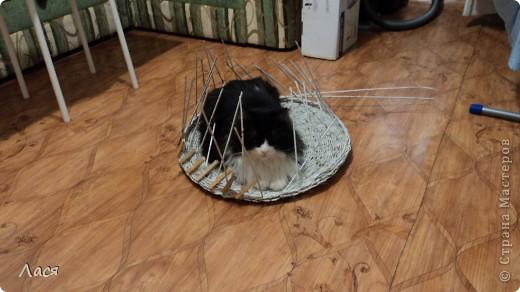 Это начало процесса, кот не давал делать, оккупировал сразу ))) фото 1