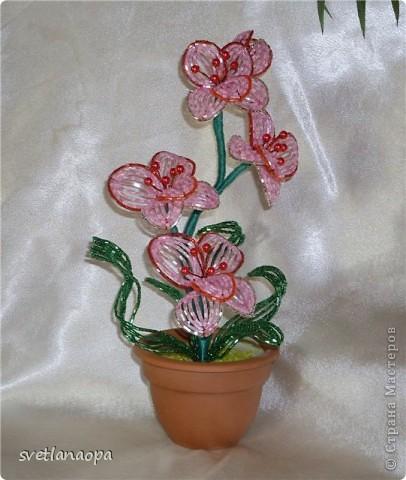 Орхидеи фото 7