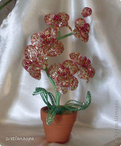 Орхидеи фото 6