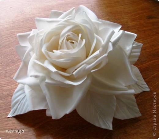 Роза цвета айвори фото 1