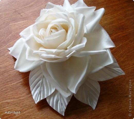Роза цвета айвори фото 2